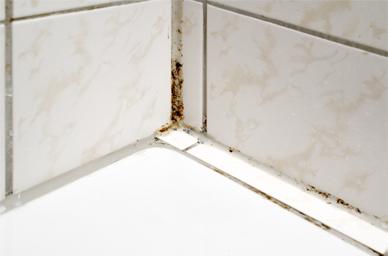 Hoe schimmel in badkamer herkennen?