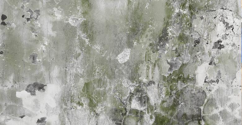 Schimmel op de muur herkennen, voorkomen en verwijderen